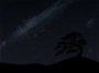 personnalisation:tree_night.png