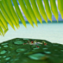 personnalisation:tropical.png